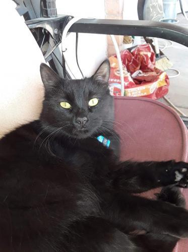Lost Male Cat last seen Dysart & Indian School, Litchfield Park, AZ 85340