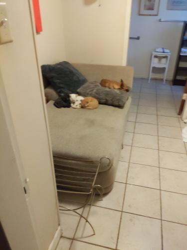 Lost Male Dog last seen Lone butte casino, Chandler, AZ 85226