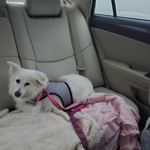 Lost Female Dog last seen  Bramcote Place and Ridgley Manor Boulevard , Virginia Beach, VA 23455