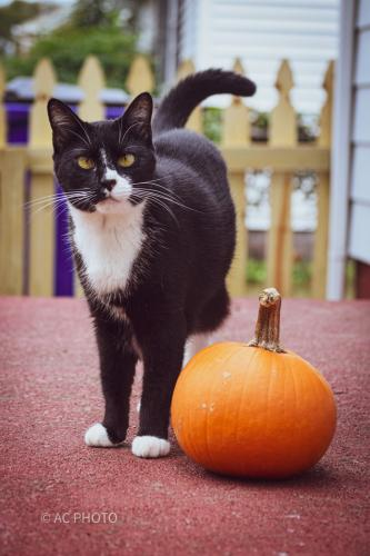 Lost Female Cat last seen Beaumont st., Norfolk, VA 23503