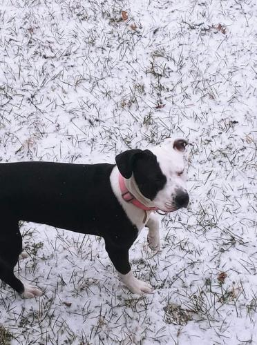 Lost Female Dog last seen Main and Parkwood, Dayton, OH 45415