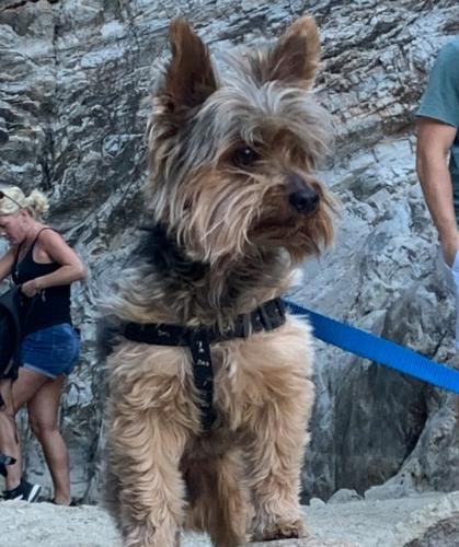 Found/Stray Male Dog last seen 91st, Peoria, AZ 85382