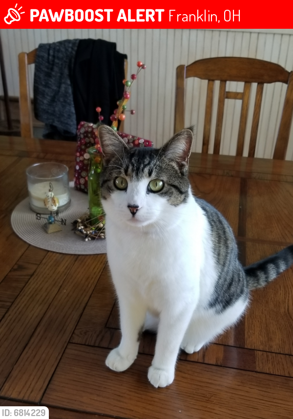 Lost Male Cat last seen Pennyroyal and Vaughn Lane, Franklin, OH 45005