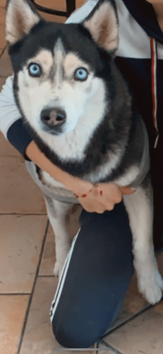 Lost Female Dog last seen Near W Campo Bello Dr Phoenix Arizona 85053, Phoenix, AZ 85053