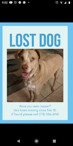 Lost Male Dog last seen Near daybreak ln, Cypress, TX 77429