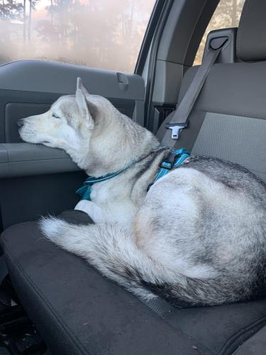Found/Stray Male Dog last seen Gosling and Woodlands Parkway, The Woodlands, TX 77381