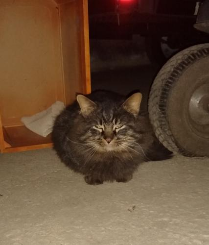 Found/Stray Male Cat last seen Frytown Rd and Route 4, Jefferson Township, OH 45417