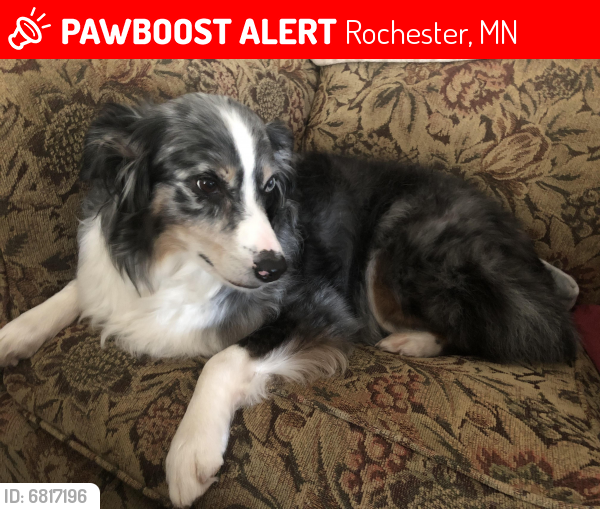 Lost Female Dog last seen 10th St SE and 3rd Ave SE, Rochester, MN 55904
