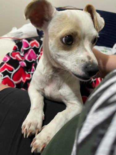 Found/Stray Male Dog last seen Subdivision near Hollister and Bourgeois Rd., Champions Crossing, TX 77066