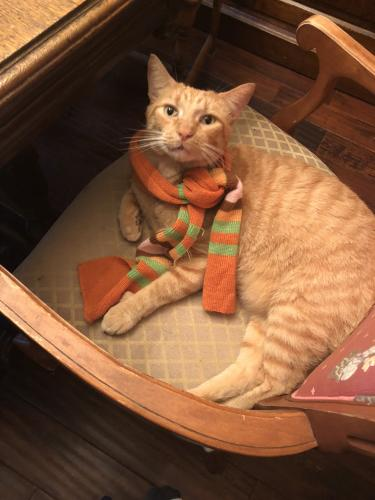 Lost Male Cat last seen Thole street & Kirby Crescent , Norfolk, VA 23505