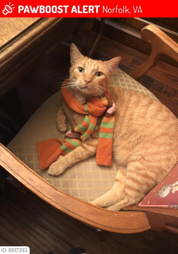 Lost Male Cat last seen Thole street & Kirby Crescent , Norfolk, VA 23505