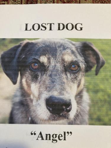 Lost Female Dog last seen Oakpark, Aroda, VA 22709