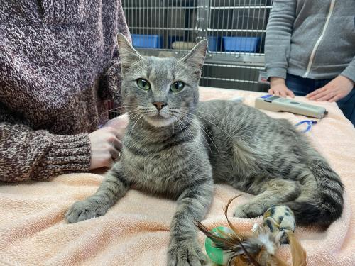 Found/Stray Female Cat last seen Venture and Wyche , Stafford, VA 22554