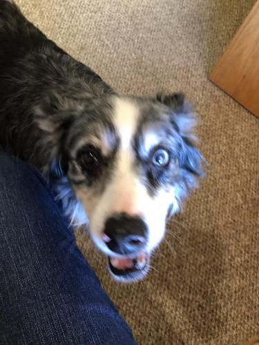 Found/Stray Female Dog last seen Hwy 52 and 16th Street SW Rochester MN, Rochester, MN 55902