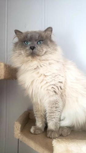 Lost Male Cat last seen Between County Rd U and Mid Valley Drive, Golden Glow Rd, WI 54130