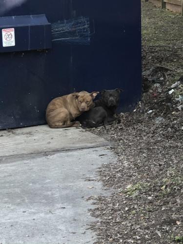 Found/Stray Male Dog last seen Near Ella blvd , Houston, TX 77014