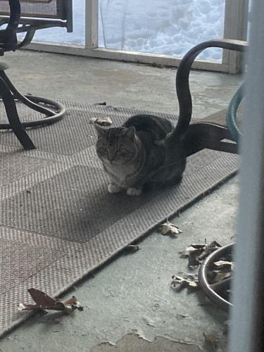 Found/Stray Unknown Cat last seen Frost Ave E and Jamaica St, Edison, NJ 08820