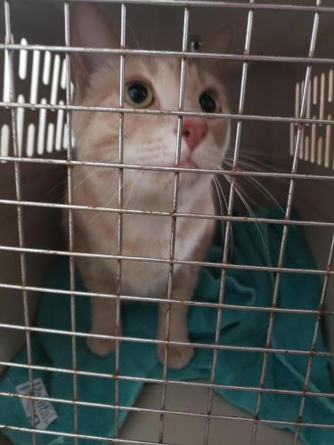 Found/Stray Unknown Cat last seen N DANZ AVE and University Ave, Green Bay, WI 54302