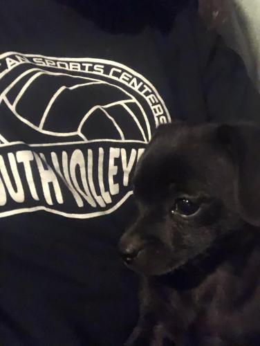 Lost Male Dog last seen Chipman and Rosear , Buckeye, AZ 85326