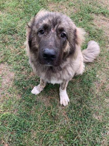 Lost Male Dog last seen Simmondale Elementary School, Portsmouth, VA 23701