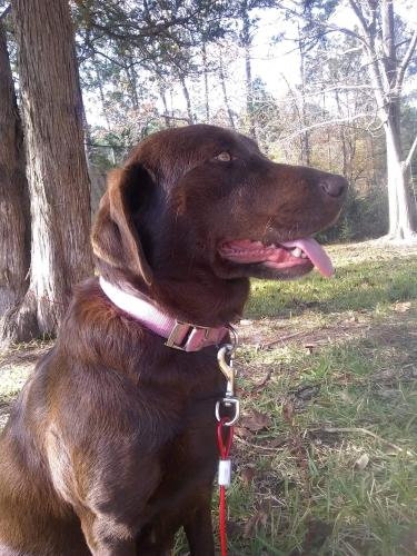 Lost Female Dog last seen Tc jester & F.M 1960, Houston, TX 77068