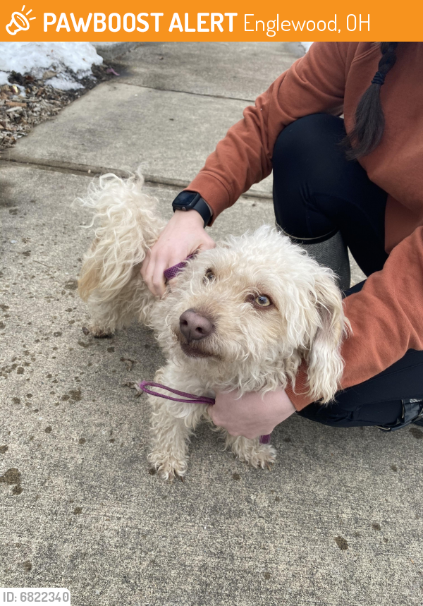 Found/Stray Male Dog last seen Bancroft Apartments, Englewood, OH 45322