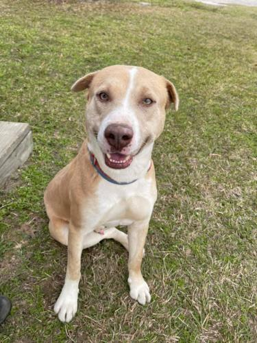 Found/Stray Male Dog last seen Near Hufsmith Cemetery Rd, Tomball, TX 77375, Tomball, TX 77375