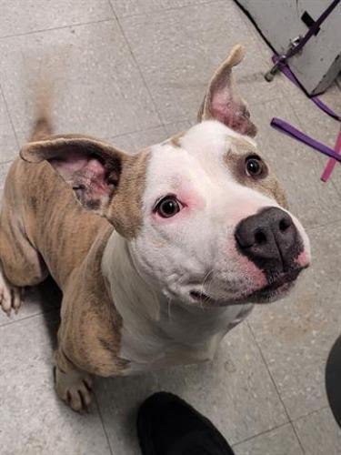 Found/Stray Male Dog last seen On Eisenhower Connector, Eisenhower Ave Connector, VA 22310