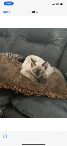 Lost Male Cat last seen Primerose and Roseville , Spring, TX 77389