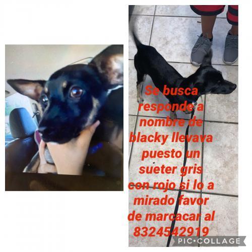 Lost Male Dog last seen Airtex y 45 norte, Houston, TX 77073