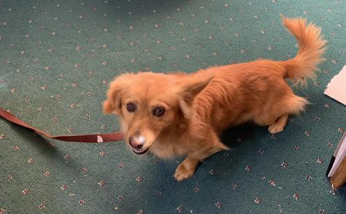 Found/Stray Unknown Dog last seen 59th Ave & Thunderbird , Glendale, AZ 85306