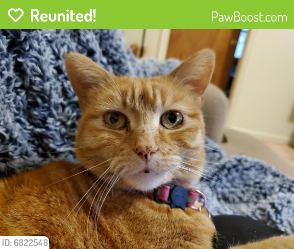 Reunited Female Cat last seen Hyde & Sharpley, Norfolk, VA 23513