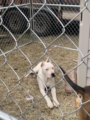 Lost Female Dog last seen Near , Houston, TX 77068