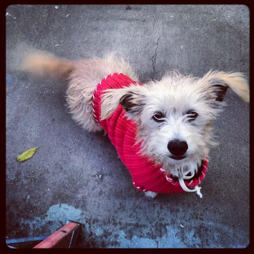 Lost Male Dog last seen Compton Blvd & Santa fe, Compton, CA 90221