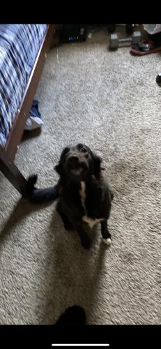 Lost Female Dog last seen Park on south 82nd lane, Phoenix, AZ 85043