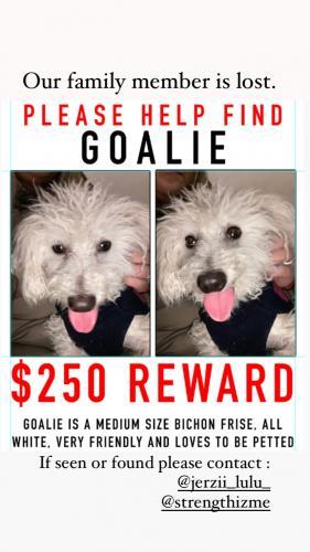 Lost Male Dog last seen Madison Ave Elizabeth NJ, Elizabeth, NJ 07201