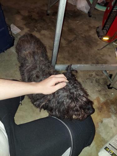 Found/Stray Female Dog last seen Near Goodfellow Dr. Spring, TX, Spring, TX 77373