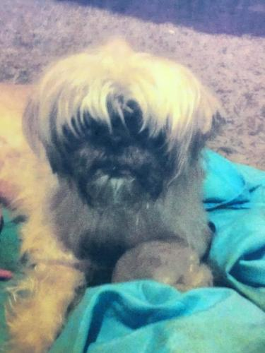 Lost Female Dog last seen Auto zone , East Orange, NJ 07018