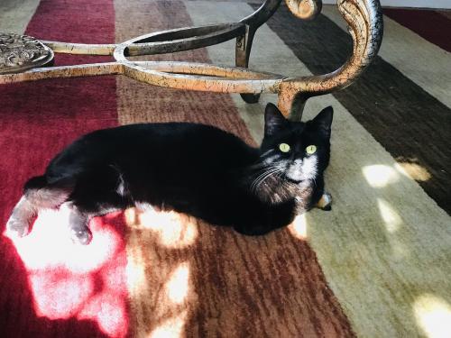 Lost Female Cat last seen Walker & 5th st Fairview , Fairview, NJ 07022