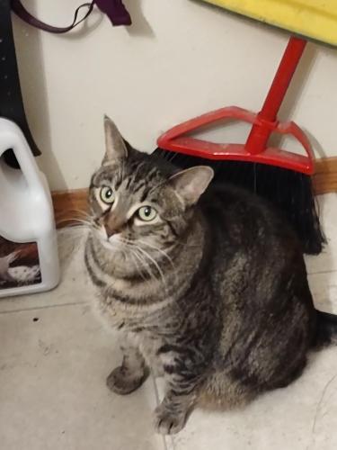 Lost Female Cat last seen Most precious blood church, New London, WI 54961
