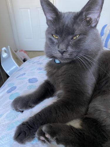 Lost Female Cat last seen Willow breeze drive , Portsmouth, VA 23523