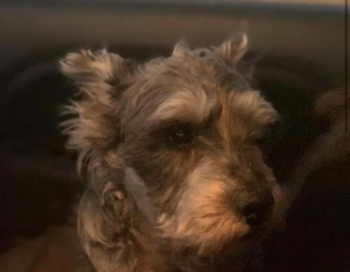 Lost Male Dog last seen N 22nd Ave & Camelback , Phoenix, AZ 85015