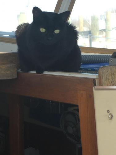 Lost Female Cat last seen Tidewater Yacht Marina, Portsmouth, VA 23704