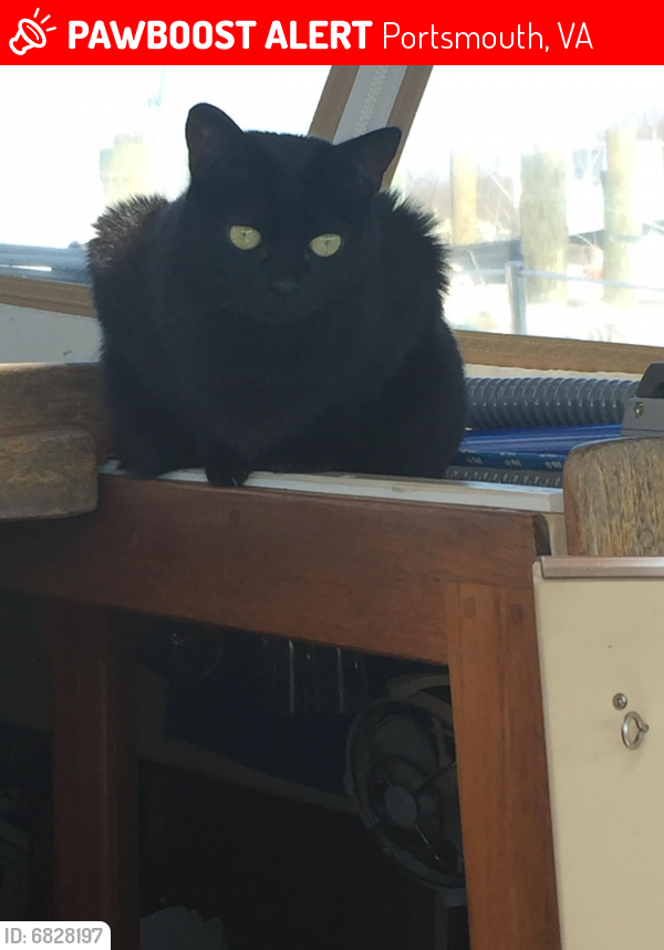 Lost Female Cat last seen Tidewater Yacht Marina, Portsmouth, VA 23704