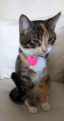 Lost Female Cat last seen Mark/Leo/Eaton/NW Washington Blvd near Hamilton school, Hamilton, OH 45013