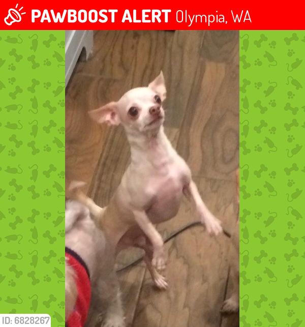 Lost Male Dog in Olympia, WA 98512 Named Julian (ID ...