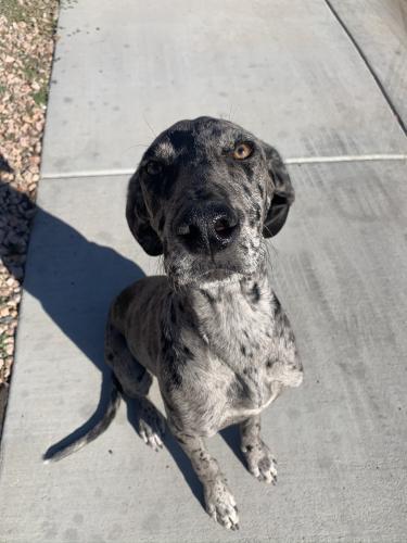 Lost Female Dog last seen Near 7th ave and union hills, Phoenix, AZ 85027