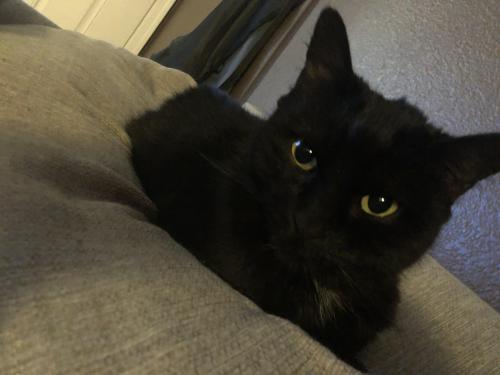 Lost Female Cat last seen Dobson Rd & 8th Ave, Mesa, AZ 85202