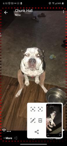 Lost Unknown Dog last seen 28th Ava catus, Phoenix, AZ 85029