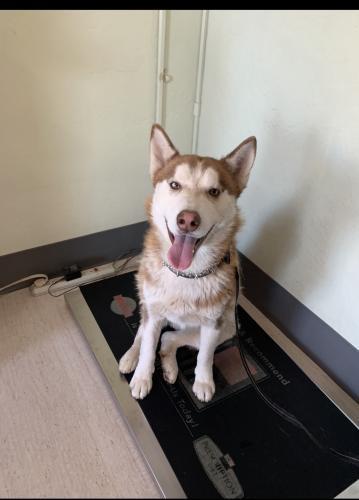 Lost Male Dog last seen 79th Ave and Thomas , Phoenix, AZ 85033